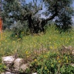 Hester's Grave